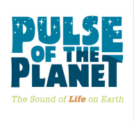 Pulse of the Planet